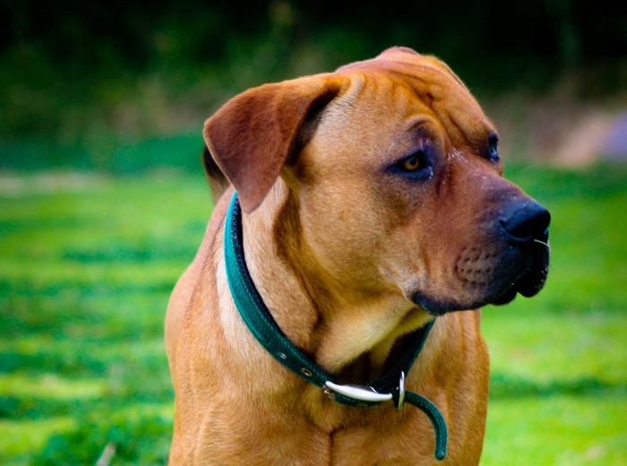 West side dog nanny los angeles dog boarding dog walker for Dog boarding los angeles